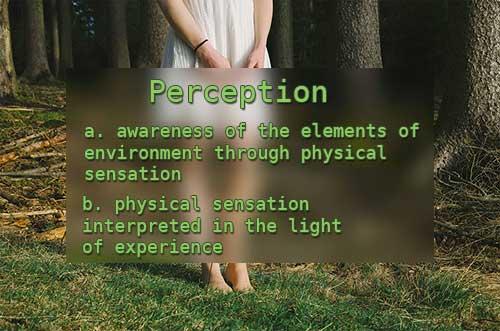perception-definition